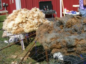 Fleeces to be picked
