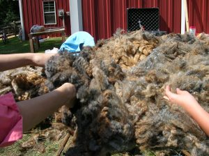 Me (on the left) Picking Fleece